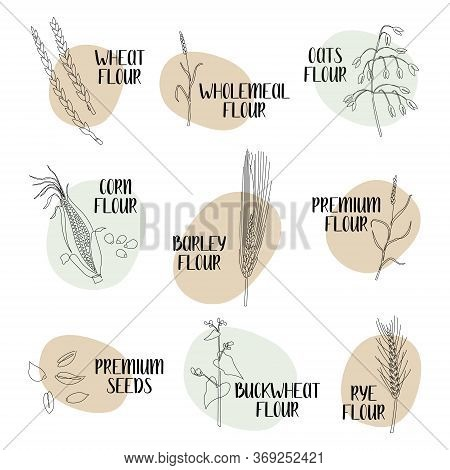 Logo Flour. Different Varieties Of Flour: Wheat, Rye, Barley, Oats, Corn, Buckwheat. Continuous Line