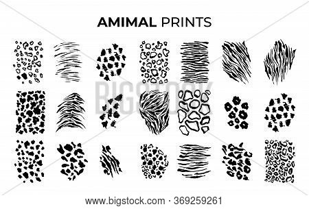 Black And White Tiger Prints Patterns, Safari Animals Skin Of Big Cats. Leopard, Jaguar And Zebra, V