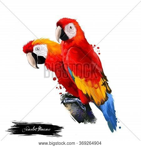 Scarlet Macaw Digital Art Illustration Isolated On White. Large Red, Yellow, And Blue South American