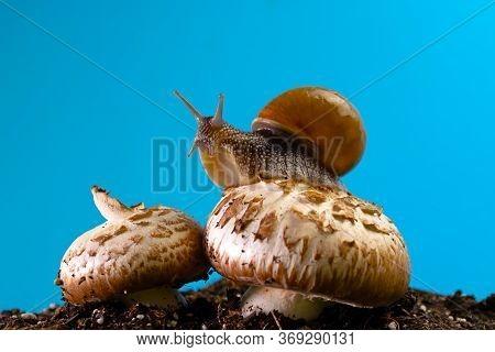Grape Snail On A Mushroom Against A Blue Sky