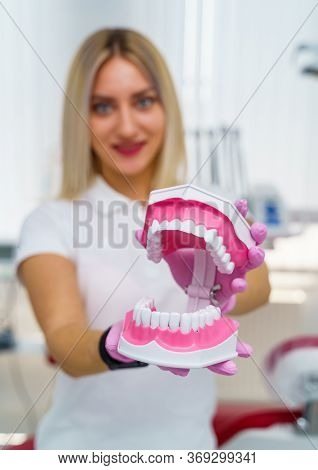 Close-up Of The Doctor S Hands In Pink Gloves Hold An Artificial Model Of The Jaw. Model Of Artifici