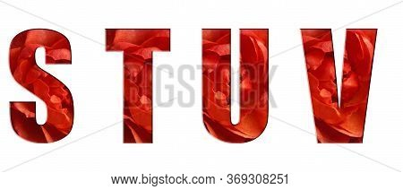 Flower Font Alphabet S, T, U, V, Of Real Live Flowers, Red Roses. White Isolated Background. Collect