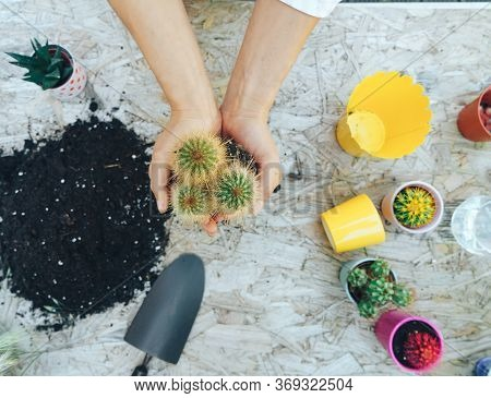 Woman's Hands Transplanting Cactus Into A New Yellow Pot On The Wooden Table. The Process Of Transpl