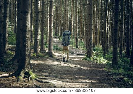 Hiking Touristic Life Style Concept Of Backpacker Walking On Pine Forest Passage Between Trees Back