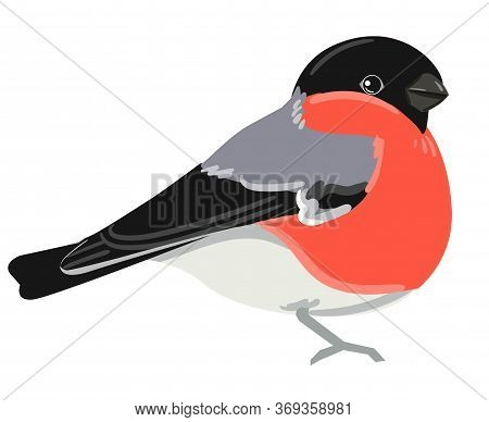 Bullfinch, Hand Drawn Cute Bird Vector Illustration.