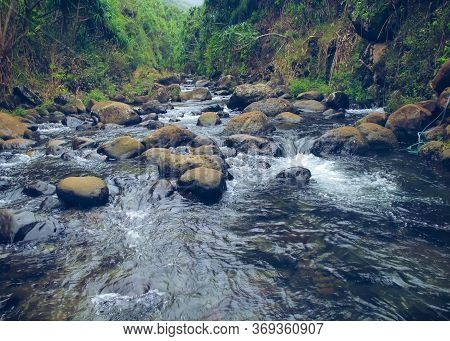 River And Rock In The Forest With Green Tree At Kauai, Hawaii