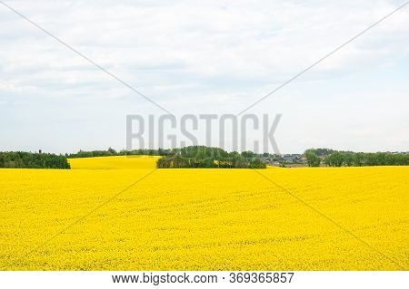 Field Of Rapeseed With Beautiful Cloud - Plant For Green Energy, Field With Yellow Rape, Plant For G