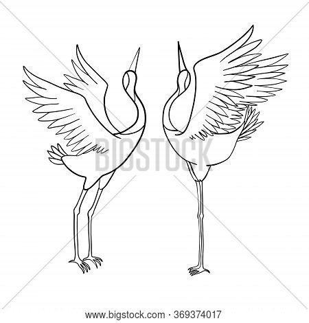 Wild Birds In Flight. Animals In Nature Or In The Sky. Cranes Or Grus And Stork Or Shadoof And Cicon