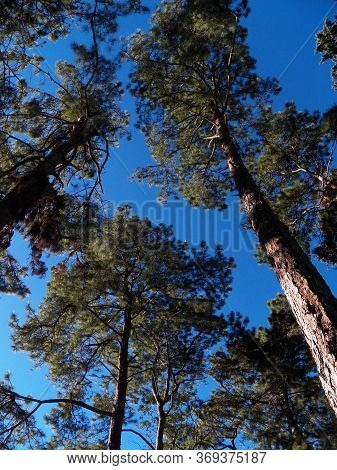 Doi Inthanon Mountain Tree Images For Commercial User.