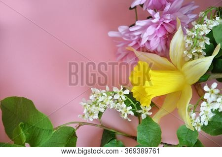 Beautiful Spring Flowers Or Sommer White Of Apple Or Bird Cherry, Daffodil, Lilac Or Purple Aster On