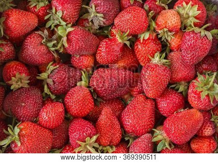 Background Of Freshly Picked Red Ripe Strawberries. Unwashed Natural Product From The Earth