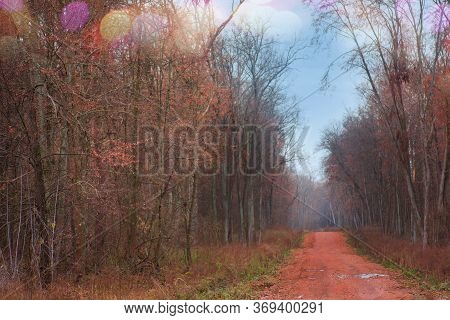 Magical Fairytale In Dreamy Foggy Forest. Mysterious Surreal Forest