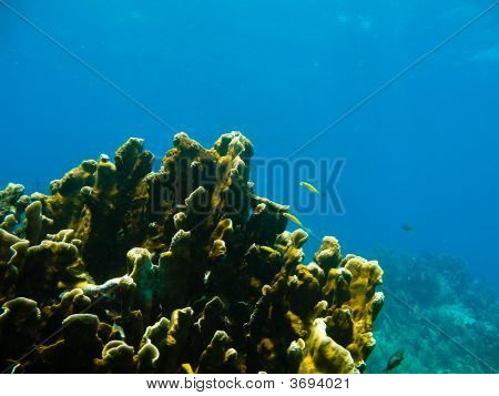 Underwater reef seaweed and fish in florida poster