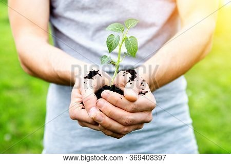 Man Hands Holding Young Plant On Green Nature Background. Environmental, Beginning And Earth Day Con