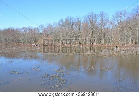 Beaver Lodge With Sticks And Water And Trees
