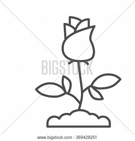 Rose Thin Line Icon, Floral Concept, Rose Blossom With Leaves Sign On White Background, Single Rose