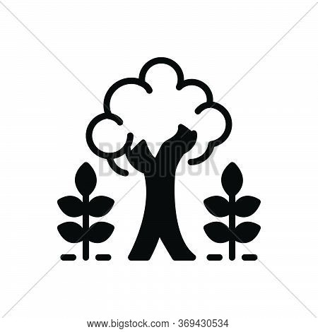 Black Solid Icon For Maturity Tree Plant Majority