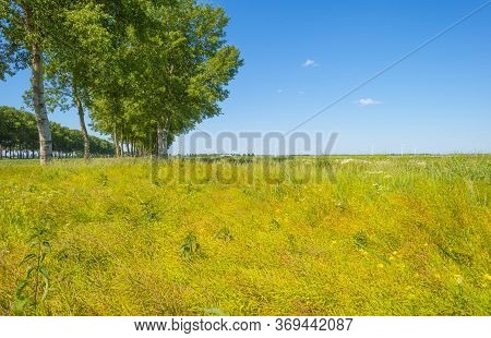 Double Line Of Trees With A Lush Green Foliage In A Grassy Green Field Along A Countryside Road In S