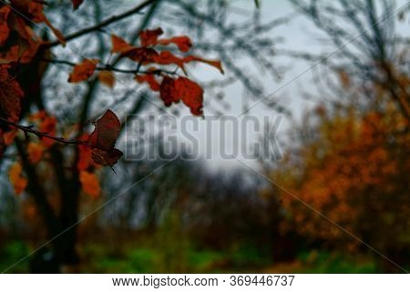 Leaves On Fruit Trees In The Garden In Autumn, Russia