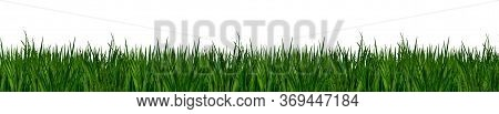 Long Blades Of Green Grass Isolated On White Background.