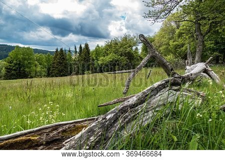 Green Meadow In Sumava Natural Park In Czechia