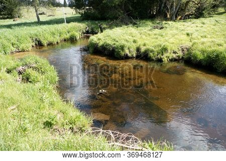 Stream In The Middle Of Sumava Forest In Czehc Republic