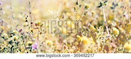 Beautiful Yellow Flower In Meadow, Flowering Meadow Flowers, Beautiful Nature In Spring
