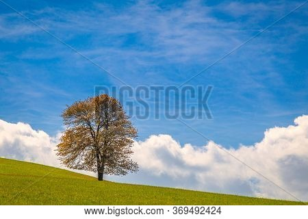 Lonely Tree On A Grassy Meadow With Blue Sky Background At Spring Time. National Nature Reserve Sulo
