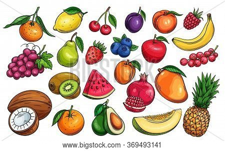 Hand Drawn Vector Fruit And Berries Icons Set. Illustration Of Color Fruits For Design Farm Product,