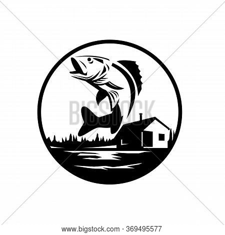 Black And White Illustration Of A Walleye (sander Vitreus, Formerly Stizostedion Vitreum), A Freshwa