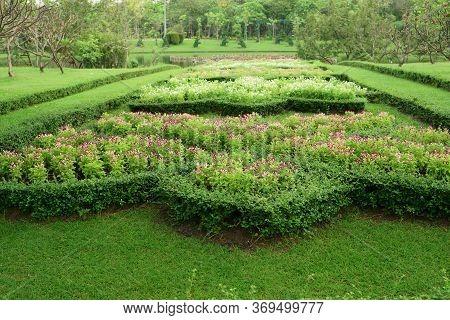 Pattern Of English Formal Garden Style,fukien Tea Cutted Around Purple And White Wishbone Flower