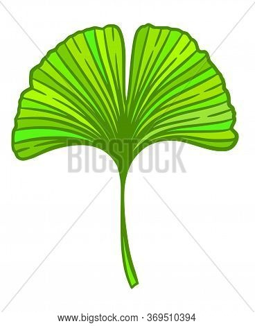 Ginkgo Or Gingko Biloba Leaf. Nature Botanical Vector Illustration, Herbal Medicine Graphic In Green