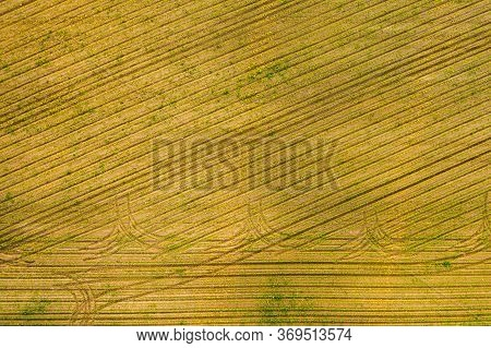 Aerial View Of The Countryside Fields Of Crops Young Maize Plants. Agriculture Field
