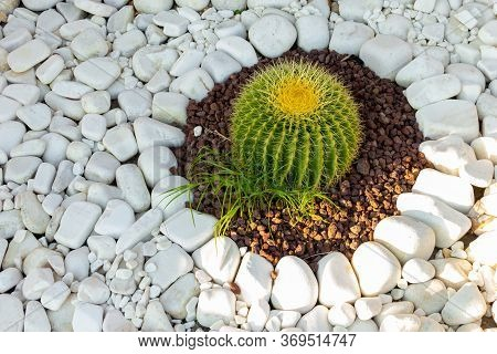 White Pebbles Around The Cactus. Background Of Natural White Pebbles With Sparkles.