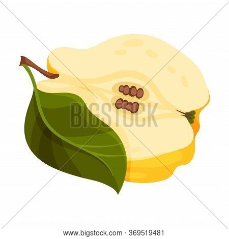 Halved Quince Showing Light Flesh With Seeds Vector Illustration