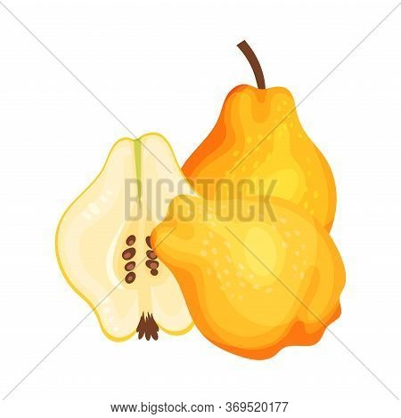 Whole And Halved Quince Showing Seeds And Flesh Vector Illustration