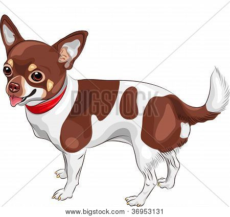 color sketch of the cute dog Chihuahua breed smiling poster