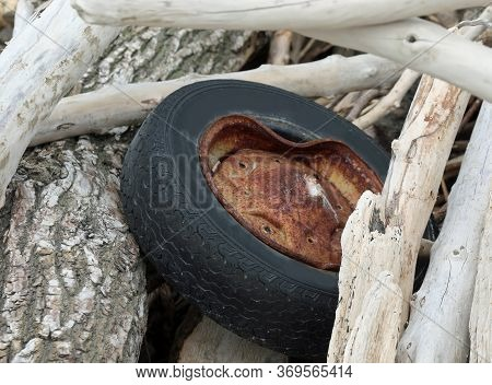Abandoned Wheel Of Car With Polluting Rubber Tire Between Branches By The River