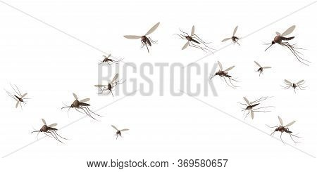 Flying Mosquito Insects. Gnat And Pest, Spreading Viruses And Diseases, Gnats Flock, Repellent Or Sp