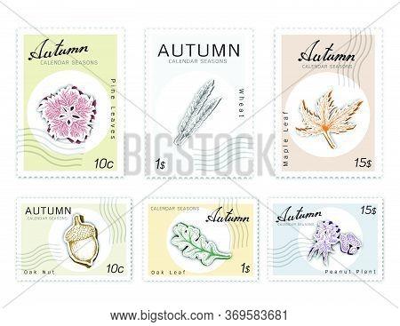Autumn Plants, Post Stamps Set Of Hand Drawn Sketch Maple, Oak Leaf, Pine Leaves, Acorn Or Oak Nut,