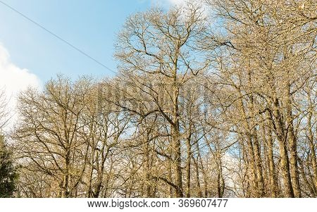 In The Woods. Forest Of Nemi, Italy. May Be Used For Background
