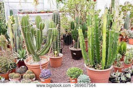 Mix Of Succulent Plants In Vases Inside A Greenhouse