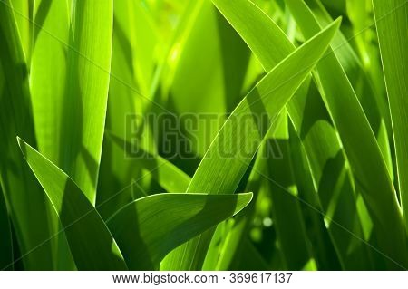 Green Grass Blur In The Background Of Bright Sunlight From The Back