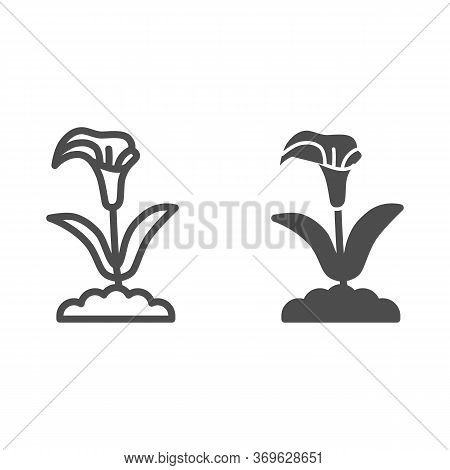 Calla Line And Solid Icon, Summer Flowers Concept, Arum Lily Sign On White Background, Calla Flower