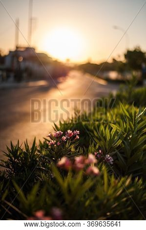 Dawn Or Sunset In The Resort City Of Ayia Napa On The Island Of Cyprus.