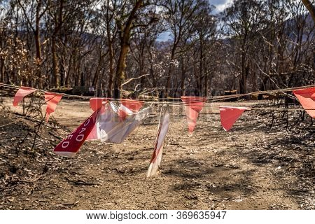 A Forest In The Snowy Mountains, Burnt Down During The Bush Fires In Australia. Area Closed With Bar