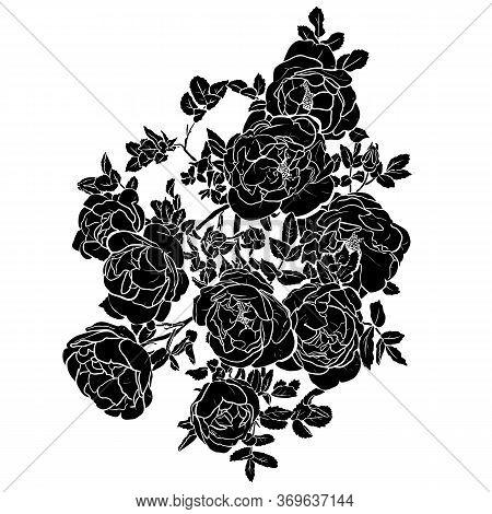 Hand Drawn Black Rose Silhouette On White Background. Vintage Vector Botanical Illustration.