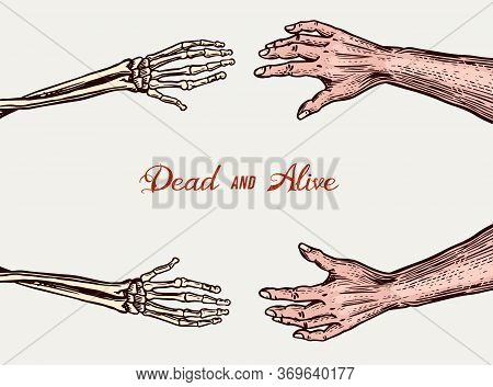 Human And Skeleton Hands. Bony Arm. Dead And Alive Concept For Halloween Banner Or Poster. Drawn Eng