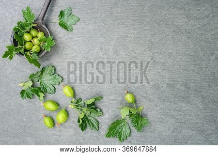 Gooseberry Leaves On A Gray Flat Lay Background With Copy Space. Gooseberry Based Product Concept.