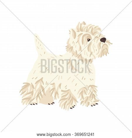 West Highland White Terrier Vector Illustration. Cute Flat Dog Breed. Pet Care And Grooming Fans Con
